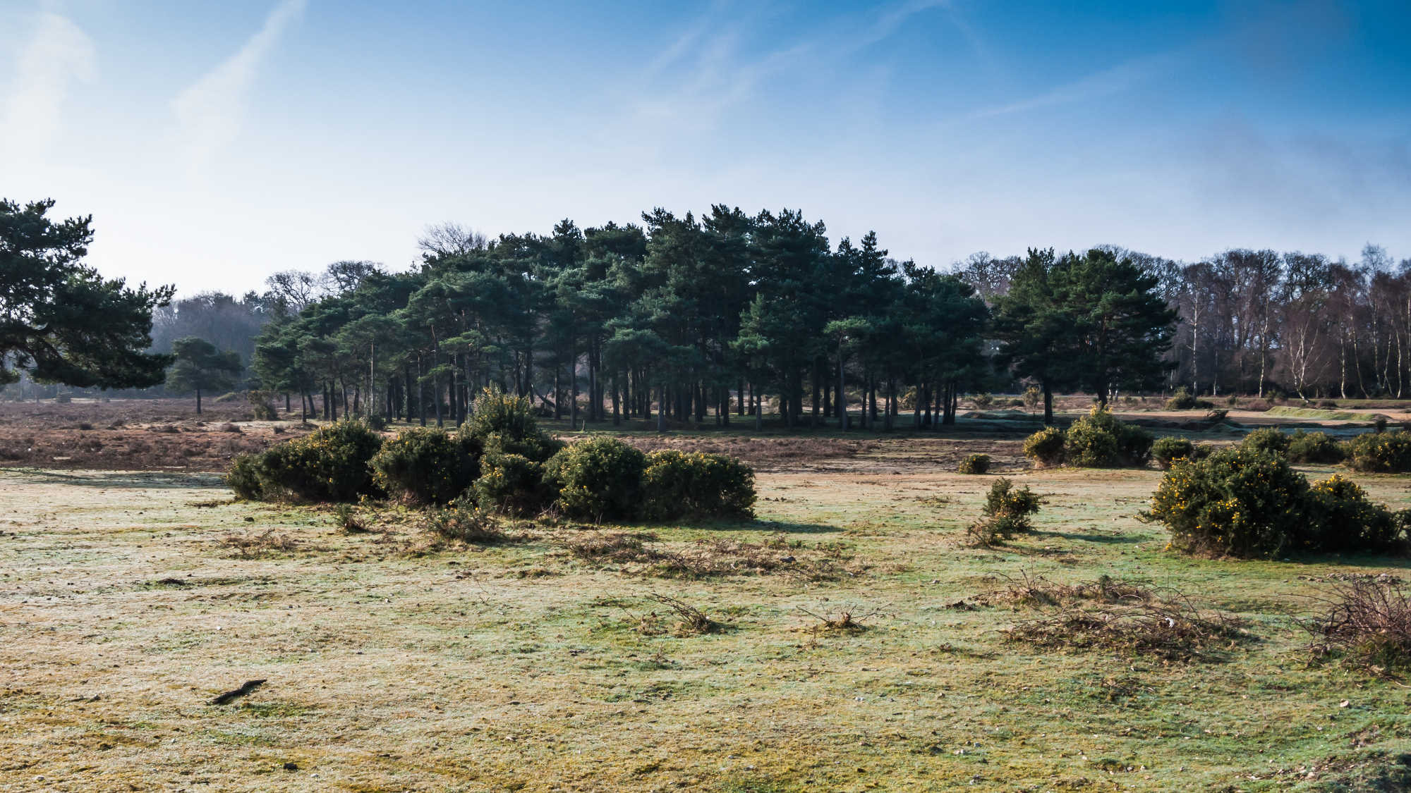 Last Minute Hotels In New Forest